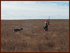 Hunting pheasants in North and South Dakota