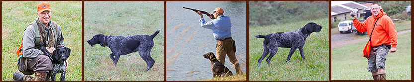 Gun Dog training including, NAVHDA conditioning, obedience, steadiness, water and finished gun dog